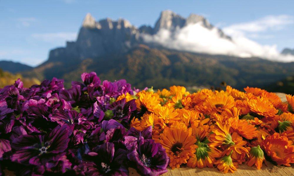 Gustarsi la bellezza della natura durante una vacanza sull'Alpe di Siusi