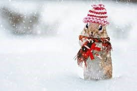 Hase Winter