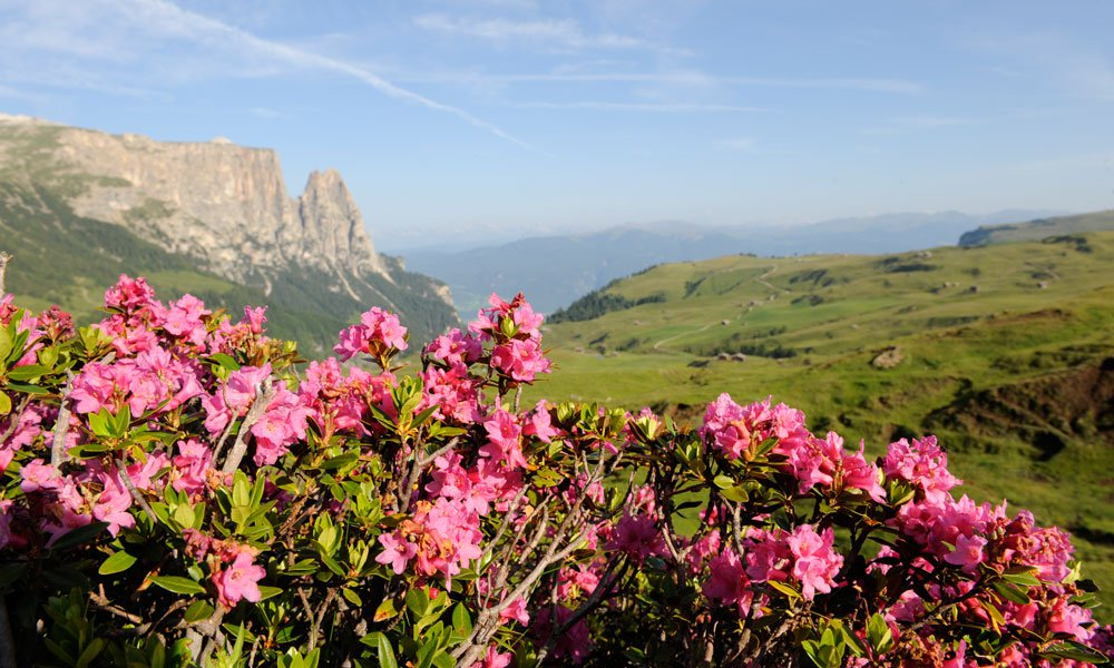 Active in many different ways in the summer holiday on Seiser Alm