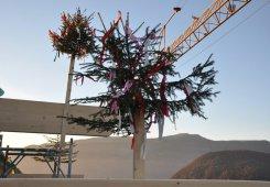 Insgesamt haben wir 5 Firstbäume von unseren Nachbarn erhalten.